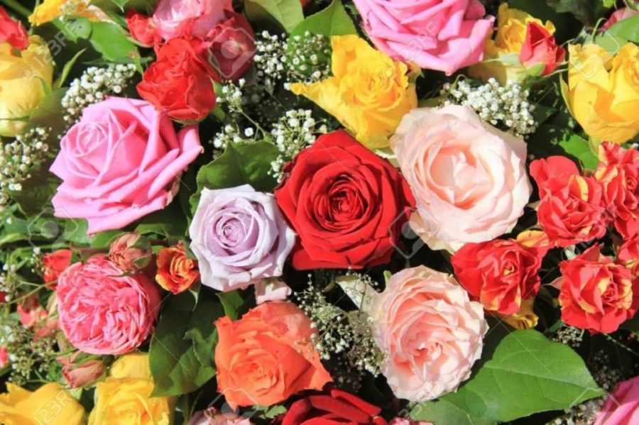Unduh 57+ Gambar Bunga Rose Paling Cantik Paling Cantik HD