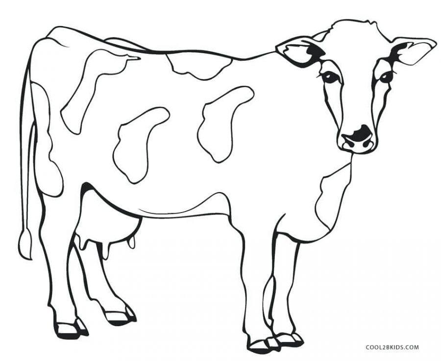 gambar mewarnai hewan sapi